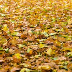 Got Leaves? Call MJM Property Maintenace