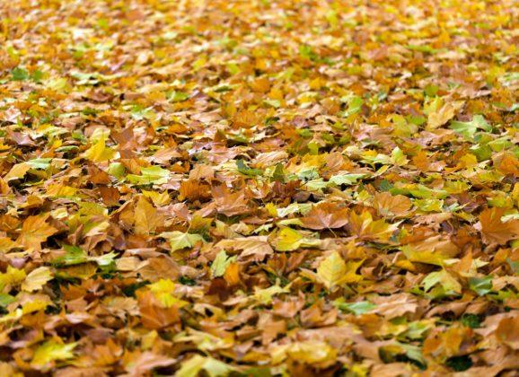 Got Leaves? Call MJM Property Maintenace
